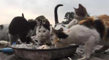 8 de cada 10 gatos son abandonados en Tabasco