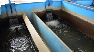 Toxicidad del agua en Tabasco, posible causa de obesidad