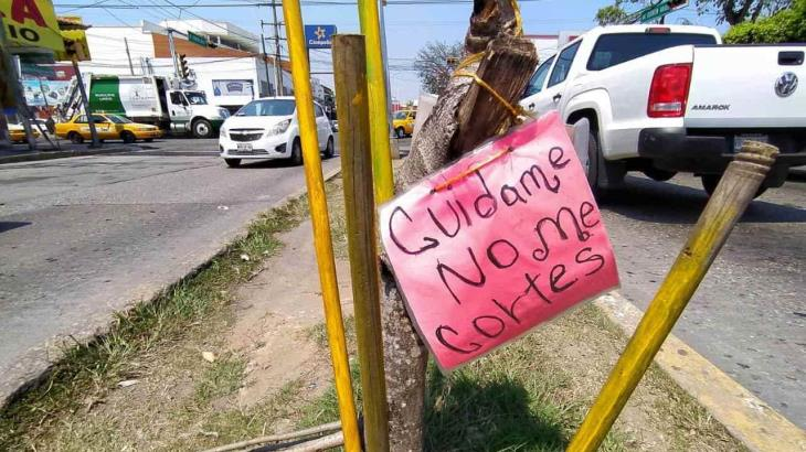 Con letreros piden no cortar árboles en crecimiento en calle de Quintín Arauz