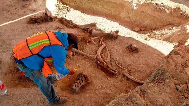 Piden proteger zona de aeropuerto de Santa Lucía, tras hallazgo de restos de mamuts