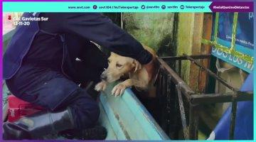 Rescata Marina a perro abandonado en medio de las inundaciones en Gaviotas Sur