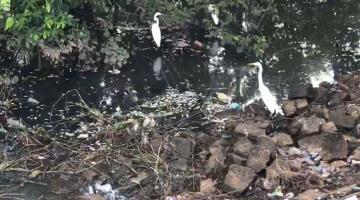 Se presenta mortandad de peces en la laguna de Las Ilusiones