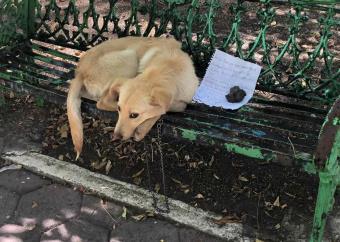 Abandonan a canino en Ciudad de México; dejan nota para que lo adopten