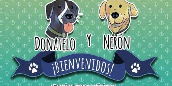 Ya tienen nombre los dos perros rescatados por la Marina en las inundaciones en Tabasco