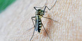 Muertes por malaria superan a las de Covid en la parte central de África